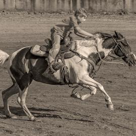 Racing to the finish line by Joe Saladino - Black & White Sports ( horse, barrel race, race, racer, rider )