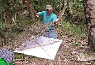 Photo: Beating a dead palm inflorescence at the Palm Grove.