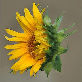 by Joseph T Dick - Flowers Single Flower ( flowers photo )
