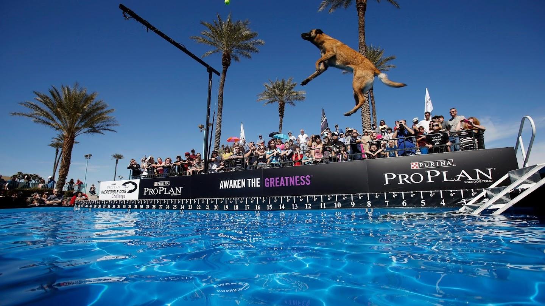 Watch 2015 Incredible Dog Challenge live