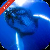 Tải تحدي لعبة الحوت الازرق APK