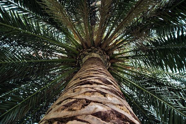 Viaggio al centro della palma di dannyvec75