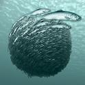 Sardine Run icon