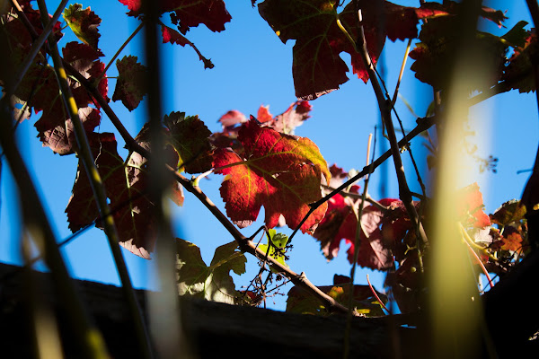 Rosso d'autunno di AntonellaM96