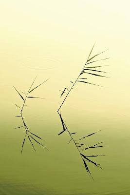 l'essenza del lago di cristinababuder