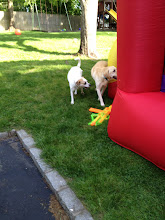 Photo: even the dogs wanted to give it a try
