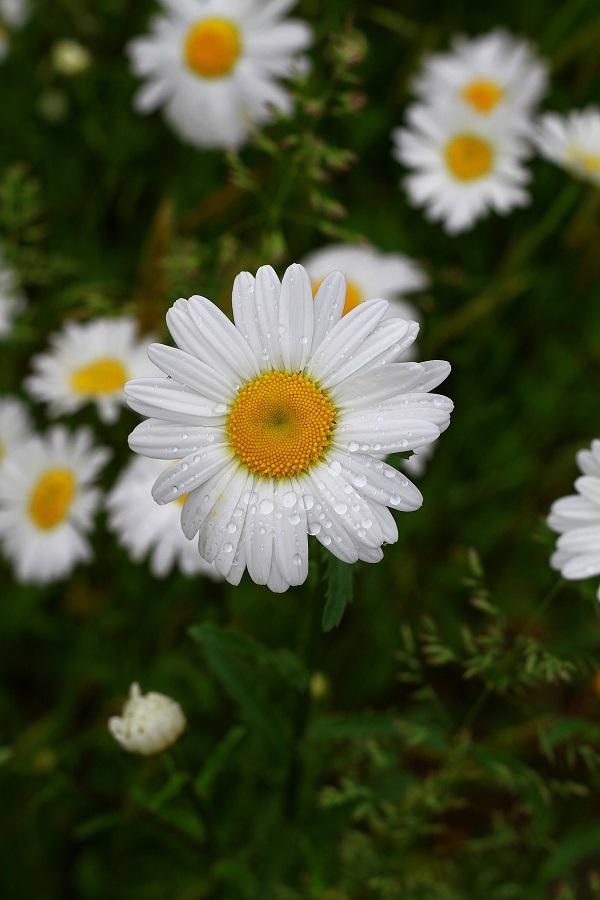 by Yoga Novariansyah - Nature Up Close Flowers - 2011-2013