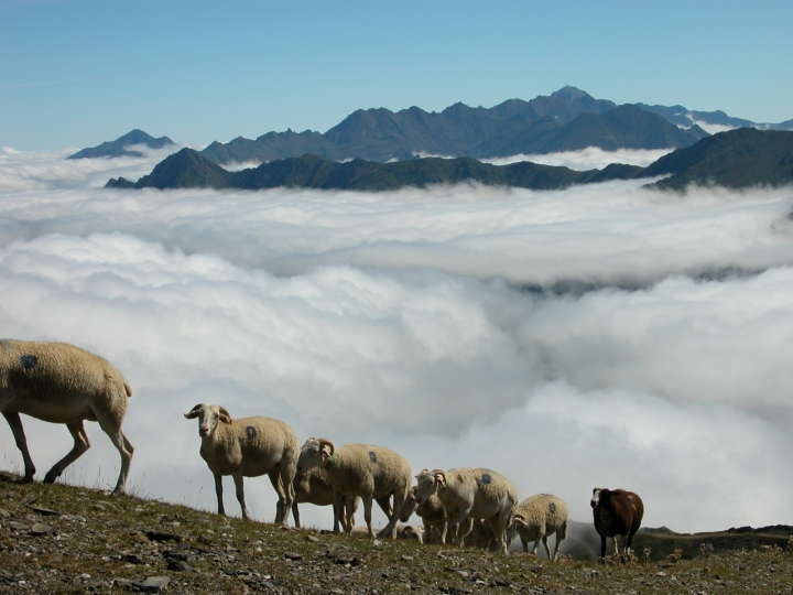 Nuvole.... e pecorelle di alfoone