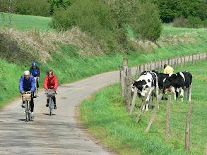 Photo: Nous y avons rencontré aussi des vaches