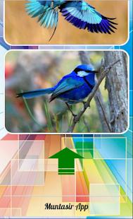 krásný pták nápady - náhled