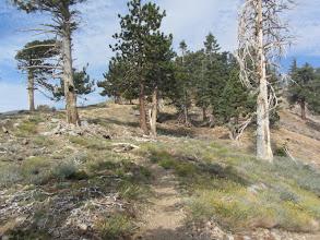 Photo: Heading west on PCT between Hawkins Ridge and Windy Gap