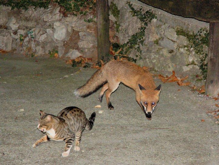 Il gatto e la volpe di Sibratos