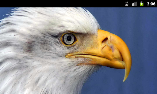 Birds of Prey - Live Wallpaper