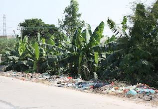 Photo: Day 213 - Banana Grove, Complete with Rubbish