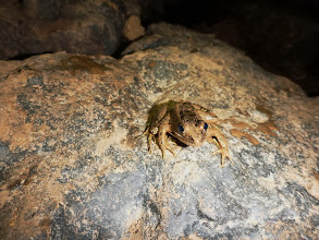 Photo: Frog at the bottom of the entrance drop
