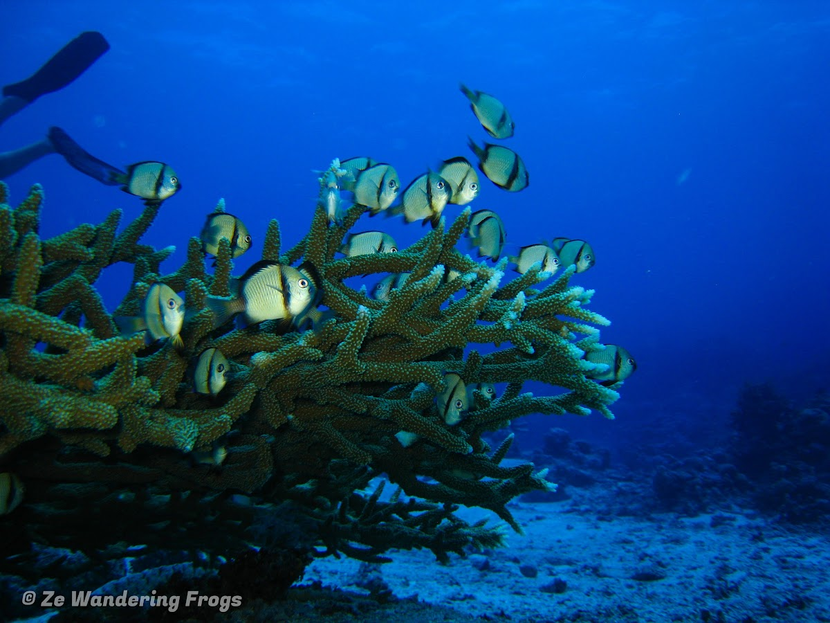 A top great barrier reef liveaboard taka dive boat - Best place to dive the great barrier reef ...