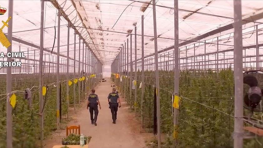 Uno de los invernaderos donde se detectaron más de 40.000 plantas de cannabis,