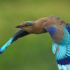 FLY by Jineesh Mallishery - Animals Birds