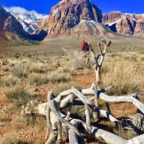 Our Home by Diane Garcia - Uncategorized All Uncategorized ( #lasvegasbeauty, #redrockcanyon, #mountains,  )