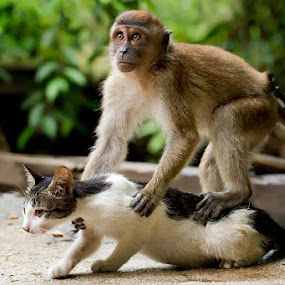 cat and monkey by Hendy Mp - Animals Other