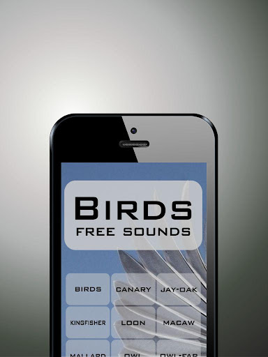 Birds funny sounds free