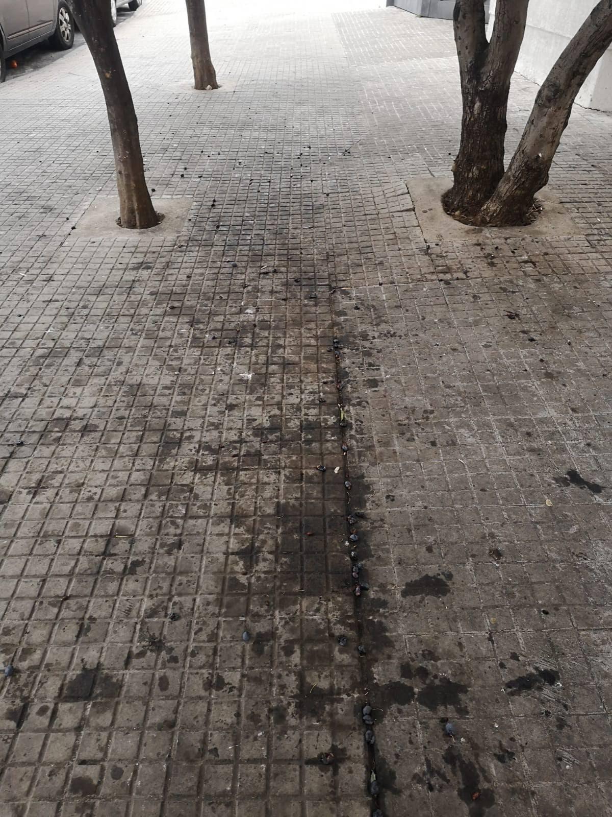La Voz de Algeciras denuncia falta de limpieza en la Cuesta del Rayo
