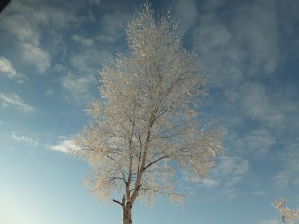 空に咲く樹氷
