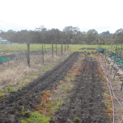Rare Vegetable Seed Farm
