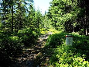 Photo: Większa część szlaku to taki borówkowy singiel, jedzie się znakomicie.