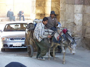 Photo: Sometimes donkeys decide to stop going until someone shoves them.