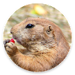 DiggieDog: A Gopher Client for Android APK