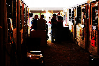Photo: Stable chatting