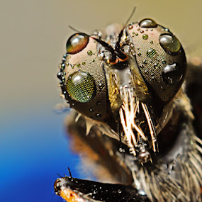 > MORNING DEW< by Dhanu Wijaya - Animals Insects & Spiders