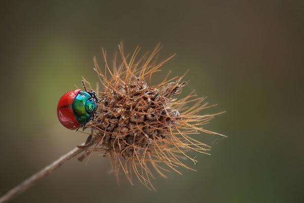 Siamo biodiversi ma stiamo bene insieme! di ricocavallo