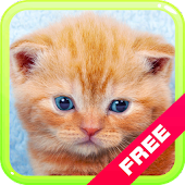 Cat Kitten Meow Sounds: Funny, Cute Feline Voices