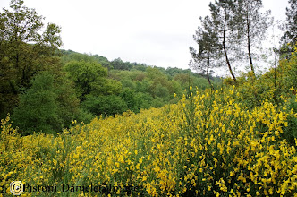 "Photo: Foresta di Broceliande la ""Valle senza ritorno"""