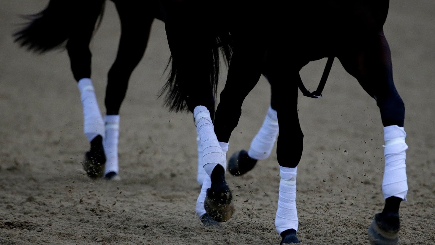 Watch Belmont Stakes Preview live