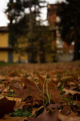 Letto di foglie di Elemau