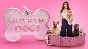 Vanderpump Dogs thumbnail