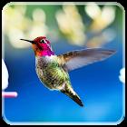 Uccello carta da parati LWP icon