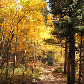 Wild Basin Trail by Jason Kiefer - Landscapes Travel ( fall, rocky mountain national park, , path, nature, landscape )
