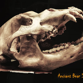Anciant Bear Skull by Dave Walters - Typography Captioned Photos ( bear, skull, animals, macro, nature up close, relic, anciant )