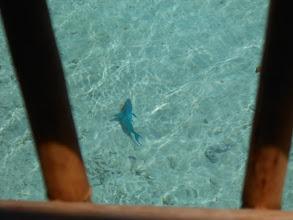Photo: Y ya estamos en Bora Bora