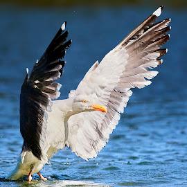 0 Bird 98739~Q by Raphael RaCcoon - Animals Birds