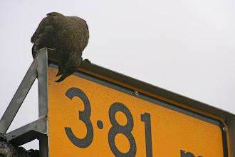Photo: ... der Spaßvogel Neuseelands