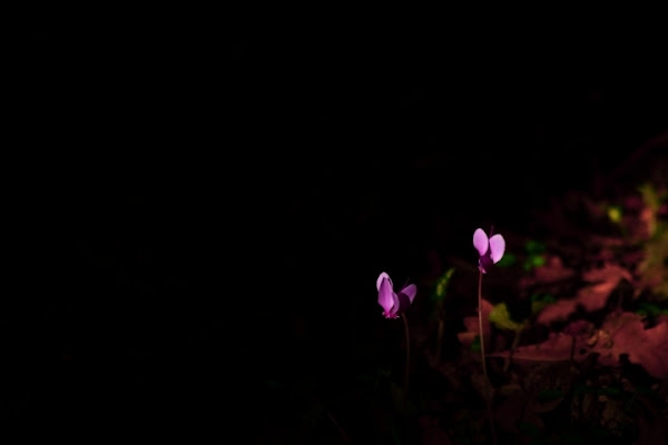Flowers di Dario Pace