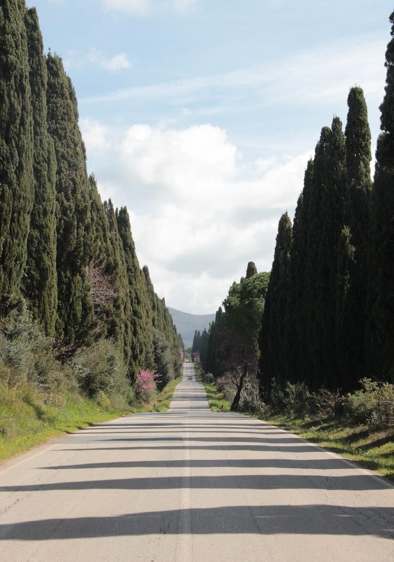Viale di Bolgheri  di Giuly94