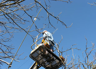 Photo: Spring time the Walnut orchard and look what is pushing up out of the ground... a new 72 foot tower with two antennas.