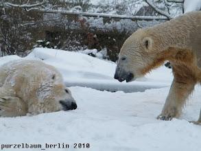Photo: Leider kein gemeinsamer Badespass - sie liegt schon wieder im Schnee herum ;-)