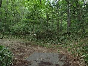 舗装路終点の登山道入口(左)
